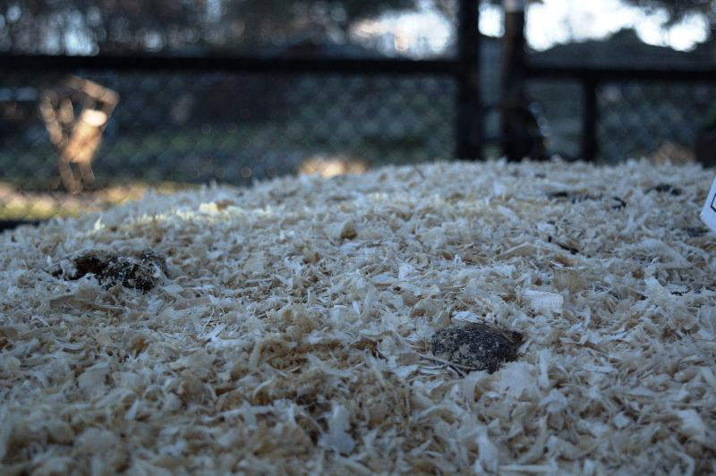 Free photo Sawdust free image