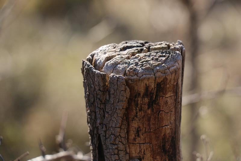free stock images Stump in the forest